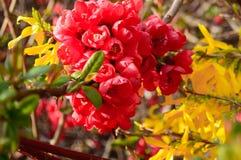 Bloeiende bomen, bloemen Stock Fotografie