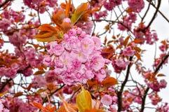 Bloeiende bomen in de botanische tuin van Kew in de lente, Londen, het UK royalty-vrije stock afbeeldingen