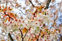 Bloeiende bomen in de botanische tuin van Kew in de lente, Londen, het UK royalty-vrije stock foto