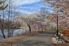 Bloeiende bomen in het park in Newark New Jersey Royalty-vrije Stock Fotografie