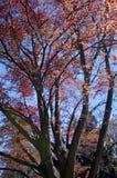 Bloeiende bomen met gelezen bladeren in de Botanische Tuinen van Christchurch in Nieuw Zeeland stock afbeelding