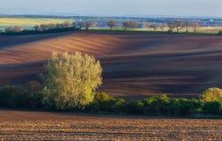 Bloeiende bomen tegen gebieden bij zonsondergang in de lente stock foto