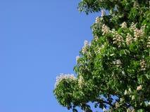 Bloeiende boom Stock Foto's