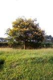 Bloeiende boom stock foto
