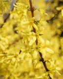 Bloeiende boom bij zonnige dag Royalty-vrije Stock Foto's