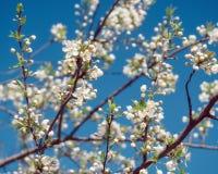 Bloeiende boom bij zonnige dag Stock Fotografie