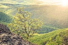 Bloeiende boom in de bergen Stock Foto's