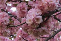 Bloeiende boom in de lente stock afbeeldingen