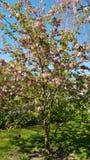 Bloeiende boom in de lente royalty-vrije stock foto's