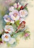 Bloeiende boom die met bloemen wordt behandeld Royalty-vrije Stock Afbeelding