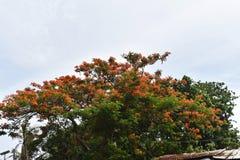 Bloeiende boom en hemel stock fotografie