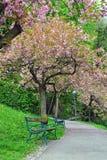 Bloeiende boom in het stadspark Stock Afbeeldingen