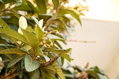 Bloeiende boom Kleine GREEP stock foto's