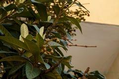 Bloeiende boom Kleine GREEP stock afbeelding
