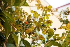 Bloeiende boom Kleine GREEP royalty-vrije stock afbeelding