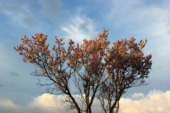 Bloeiende boom tegen de blauwe hemel, bodemmening stock fotografie
