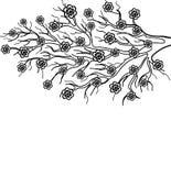 Bloeiende boomtak, een symbool van de lente Stock Afbeeldingen