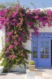 Bloeiende bougainvillea bij de deur, eigenschap Mykon Royalty-vrije Stock Afbeeldingen