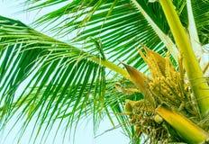Bloeiende bovenkant van palm stock afbeeldingen