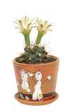 Bloeiende cactus Gymnocalycium in pot met beeld Royalty-vrije Stock Foto's