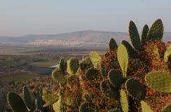 Bloeiende cactussen Royalty-vrije Stock Afbeelding