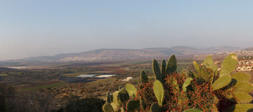 Bloeiende cactussen Royalty-vrije Stock Fotografie