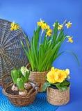 Bloeiende de lentebloemen in een mand op blauwe achtergrond Stock Afbeelding