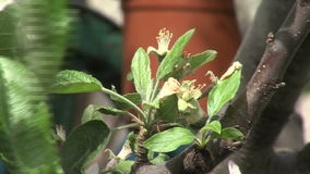 Bloeiende fruitbomen in Marine Park van Bourgas in Bulgarije stock video
