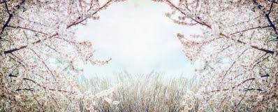 Bloeiende fruitbomen over hemel en de lenteaardachtergrond in tuin of park Royalty-vrije Stock Fotografie