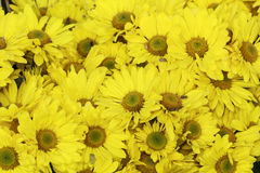 Bloeiende gele bloem Stock Afbeeldingen