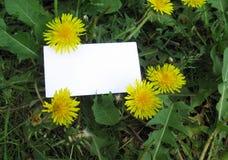 Bloeiende gele bloem met plaats voor tekst stock foto's