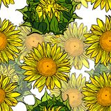 Bloeiende gele zonnebloemen en onontloken groene bloemknoppen Royalty-vrije Stock Fotografie