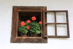 Bloeiende geraniumsbloemen in potten in een houten venster royalty-vrije stock foto