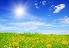 Bloeiende groene gebied en zonhemel Royalty-vrije Stock Foto