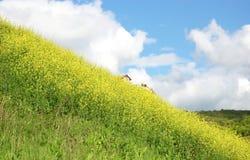 Bloeiende heuvel Stock Afbeeldingen