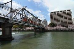 Bloeiende kersenbloesem, de lente in Osaka Japan Stock Afbeeldingen