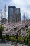 Bloeiende kersenbloesem, de lente in Osaka Japan Royalty-vrije Stock Foto