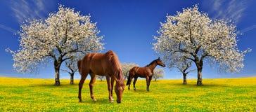 Paarden in weide royalty-vrije stock afbeelding