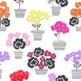 Bloeiende kleurrijke geraniums in potten Naadloos vectorpatroon Bloemenillustratie op witte achtergrond royalty-vrije illustratie