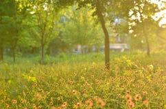 Bloeiende kruiden, vage bomen, zonsonderganglicht stock foto's