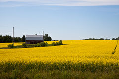 Bloeiende landbouwersgewassen Royalty-vrije Stock Fotografie