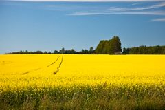 Bloeiende landbouwersgewassen Stock Afbeeldingen