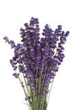 Bloeiende Lavendel Royalty-vrije Stock Afbeeldingen