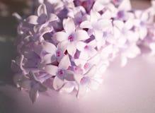 Bloeiende lilac bloemen Het macrobeeld van de lente lilac violette bloemen, vat zachte bloemenachtergrond samen stock foto's