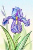 Bloeiende lilac iris vector illustratie