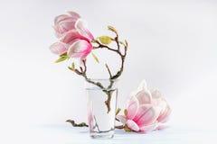 bloeiende magnolia stock fotografie