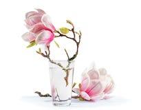 Bloeiende magnolia royalty-vrije stock fotografie