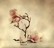 Bloeiende magnolia royalty-vrije stock afbeelding