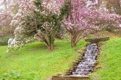 Bloeiende magnolia in een park in baden-Baden royalty-vrije stock foto's