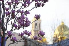 Bloeiende Magnolia op de achtergrond van een Orthodoxe Kerk stock fotografie